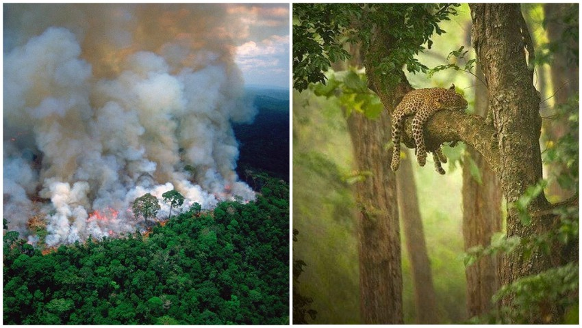 Foto: Amazonia arde deja de 16 zile. Imagini care îți frâng inima