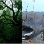 Foto: Amazonia dispare! Jungla verde și deasă se transformă într-un cimitir cu cenușă