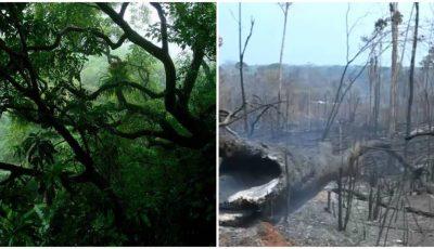 Amazonia dispare! Jungla verde și deasă se transformă într-un cimitir cu cenușă