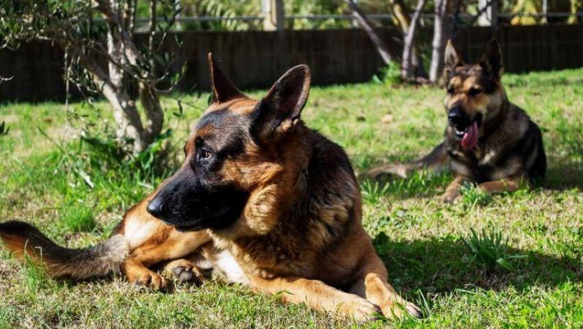 Foto: Detalii noi despre fetița ucisă de câine, la Ialoveni. Cum s-a întâmplat totul?