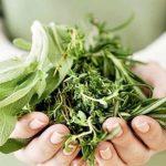Foto: 12 plante vindecătoare pe care este bine să le ai în casă