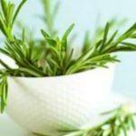 Foto: Rozmarinul ajută la detoxifiere și curățarea limfei
