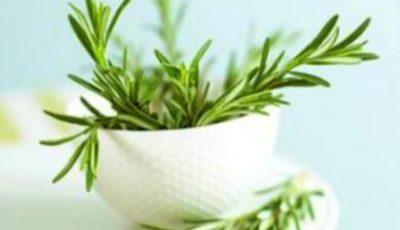 Rozmarinul ajută la detoxifiere și curățarea limfei