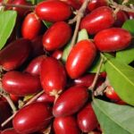 Foto: Coarnele, fructele care ajută la buna funcționare a glandei tiroide și sistemului limfatic