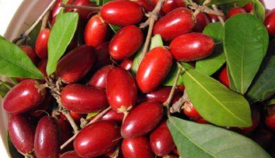 Coarnele, fructele care ajută la buna funcționare a glandei tiroide și sistemului limfatic