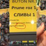 Foto: Prune importate din Olanda în magazinele din Chișinău, în timp ce fructele noastre rămân în livezi