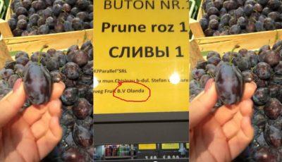 Prune importate din Olanda în magazinele din Chișinău, în timp ce fructele noastre rămân în livezi