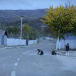 Foto: Drumul nu e un loc de joacă! Tu știi unde este copilul tău acum?