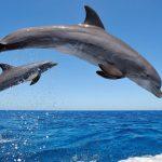 Foto: Delfinii sunt pe cale de dispariție în Marea Neagră, din cauza oamenilor!