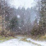 Foto: Ninge în România. Prima zăpadă din acest sezon a căzut deja