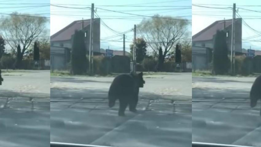 Video. Un urs aleargă după doi copii pe o stradă din Brașov. Oamenii au fost avertizați să nu iasă din case