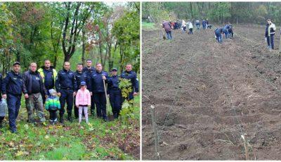 Angajații Poliției, împreună cu familiile lor, au plantat astăzi sute de arbori și arbuști pe întreg teritoriul țării