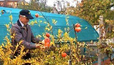 Un biolog din Tohatin cultivă kiwi, rodii, smochine şi alte plante rare