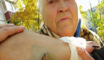 O bătrânică din Bălți, doborâtă la pâmânt și mușcată de trei câini vagabonzi, pe stradă