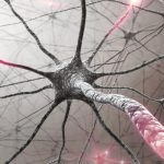 Foto: O cercetătoare de la Universitatea Cambridge a descoperit cum poate fi tratată scleroza multiplă