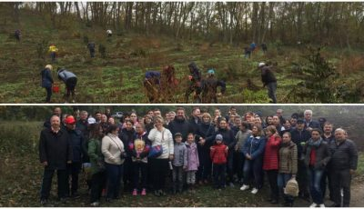 Sute de oameni au ieșit astăzi la muncă. Au plantat o pădure întreagă de stejari la Puhoi!