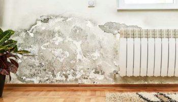 Ce simptome și afecțiuni poate declanșa mucegaiul din locuință?