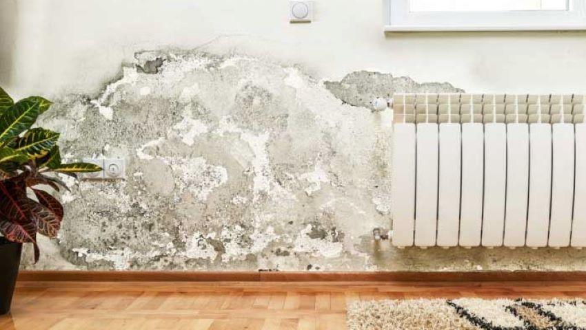 Foto: Ce simptome și afecțiuni poate declanșa mucegaiul din locuință?