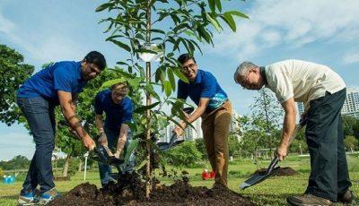 Elevii și studenții din Filipine trebuie să planteze 10 copaci pentru a-și putea lua diplomele