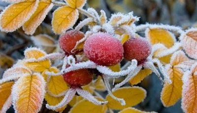 Meteorologii au emis cod galben de îngheț