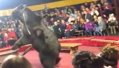 Video. În Rusia, un urs și-a atacat dresorul în timpul unui spectacol de circ