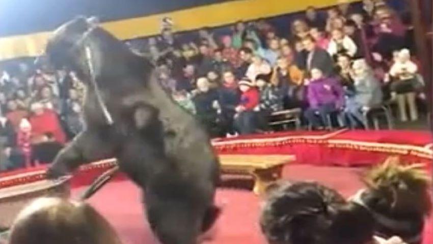 Foto: Video. În Rusia, un urs și-a atacat dresorul în timpul unui spectacol de circ