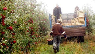 Muncitori din Uzbekistan, angajați la strânsul roadei din livezile Moldovei