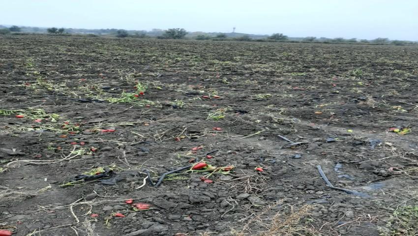 Foto: Alarmant. Niveluri ridicate de plumb, în legumele cultivate în apropierea albiei râului Bîc