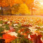 Foto: Octombrie 2019 – cea mai caldă lună octombrie înregistrată vreodată în lume, spun experții