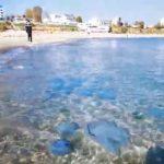 Foto: Meduze uriașe au invadat plaja din Mamaia. Video