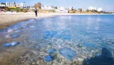 Meduze uriașe au invadat plaja din Mamaia. Video