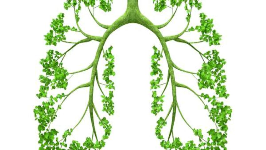 Cele mai eficiente modalități de a îmbunătăți în mod natural sănătatea plămânilor