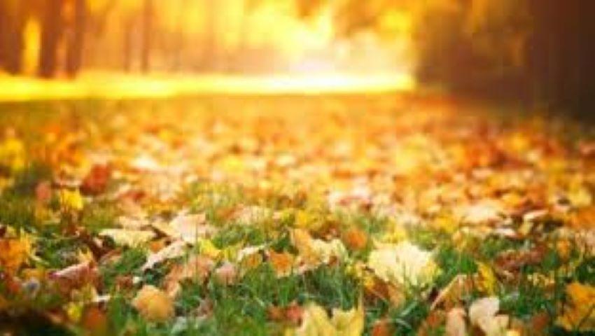 Foto: Vremea se încălzește. Temperaturi de până la +15 grade, în ultimele zile din luna noiembrie