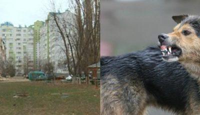 O femeie a fost atacată și mușcată de o haită de câini, pe strada Socoleni din Capitală