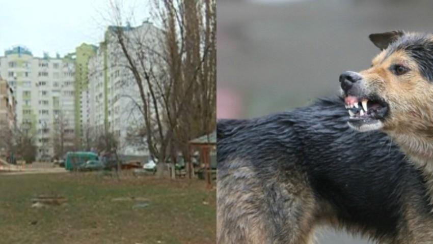 Foto: O femeie a fost atacată și mușcată de o haită de câini, pe strada Socoleni din Capitală