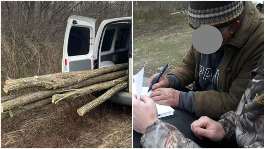 Foto: A tăiat copaci într-o pădure ca să se încălzească, însă va trebui să plătească amenda