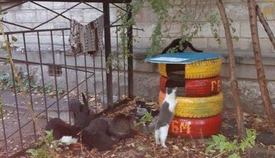 În curțile blocurilor din Chișinău apar tot mai multe căsuțe de iarnă pentru pisici