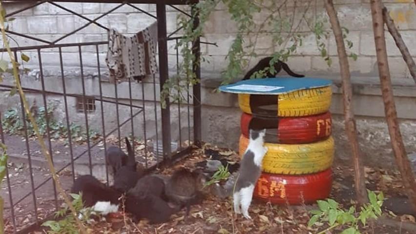 Foto: În curțile blocurilor din Chișinău apar tot mai multe căsuțe de iarnă pentru pisici