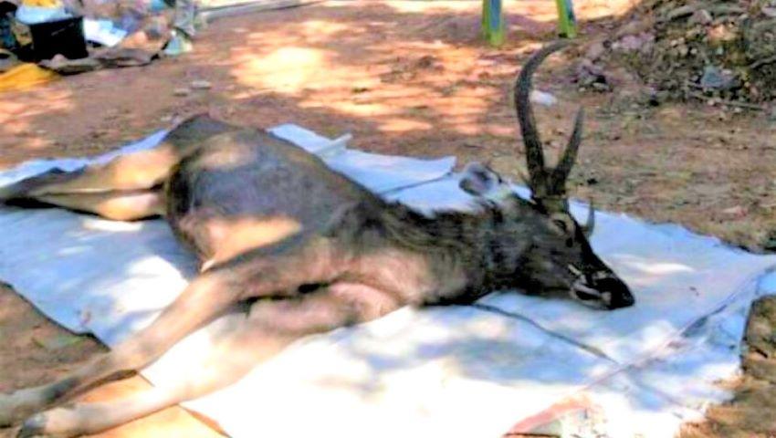 Foto: Un cerb a murit cu 7 kilograme de plastic și deșeuri în stomac