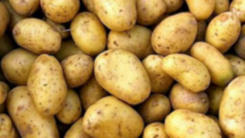 Foto: 95% din loturile de cartofi care ajung în Moldova sunt infestate cu o bacterie patogenă