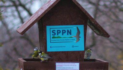 Îți pasă de viețuitoare? Participă la concursul iernii: fotografiază păsări la hrănitoare și câștigă premii inedite!