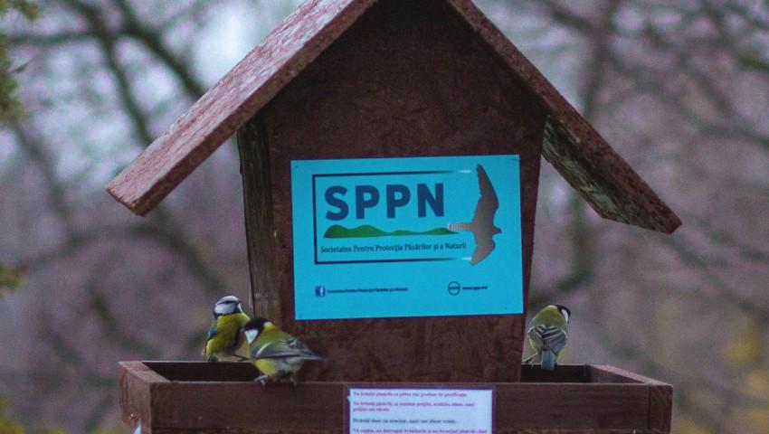 Foto: Îți pasă de viețuitoare? Participă la concursul iernii: fotografiază păsări la hrănitoare și câștigă premii inedite!