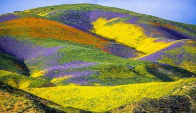 Foto! Au răsărit flori pe un câmp cuprins de incendii în California