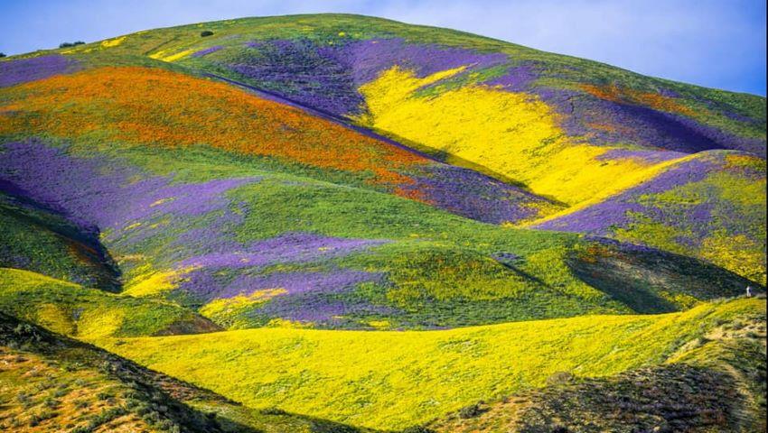 Foto: Foto! Au răsărit flori pe un câmp cuprins de incendii în California