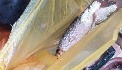Specie de pește, inclusă în Cartea Roșie, se vindea în piața centrală din Chișinău