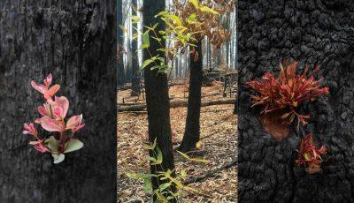 Cresc flori în locurile devastate de incendii în Australia. Imagini realizate de fotograful Mary Voorwinde