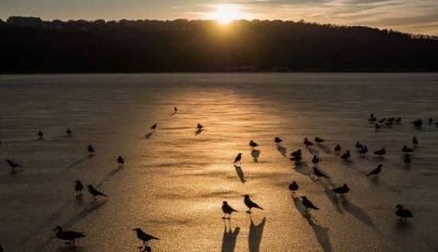"""Fotografii uimitoare! Lacul din parcul ,,Valea Morilor"""", în luna ianuarie"""