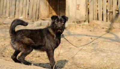 Uniunea Europeană interzice ţinerea câinilor în lanţ