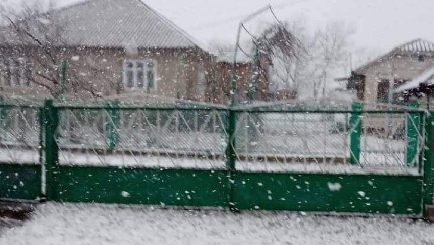 Foto. Ninge în Moldova!