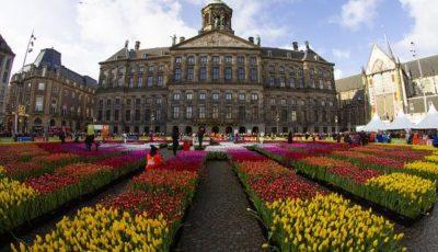 Video! Peisaj de poveste în Amsterdam, de ziua națională a Lalelei!